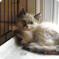 Adopt A Pet :: Ivy - Riverside, RI