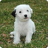 Adopt A Pet :: April - La Habra Heights, CA