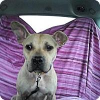Adopt A Pet :: Blondie - Grand Rapids, MI