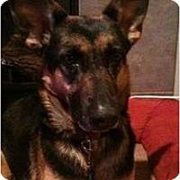 Adopt A Pet :: Elaine - Seattle, WA