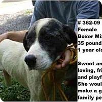 Adopt A Pet :: # 362-09 - Animal Shelter - Zanesville, OH
