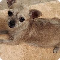 Adopt A Pet :: SHODU - Higley, AZ
