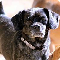Adopt A Pet :: Rex - Naugatuck, CT