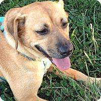 Adopt A Pet :: Tawny - Hanover, PA