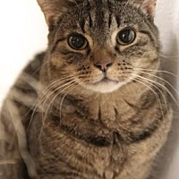 Adopt A Pet :: Tango - Freeport, NY