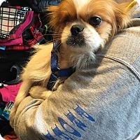 Adopt A Pet :: Montana (Mona) - Chicago, IL
