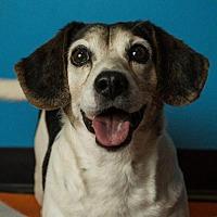 Adopt A Pet :: Barney - McKenzie, TN