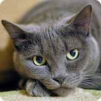 Adopt A Pet :: Frankie - Scituate, MA