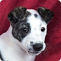 Adopt A Pet :: **BELAMIE** - Mukwonago, WI