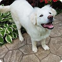 Adopt A Pet :: Flurry - New Oxford, PA