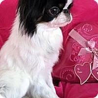 Adopt A Pet :: Reggie - Aurora, CO