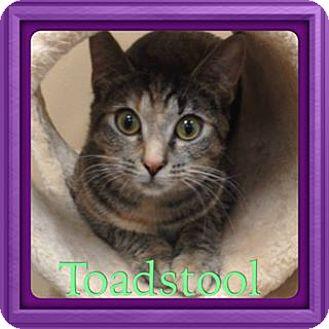 Domestic Shorthair Cat for adoption in Newnan, Georgia - Toadstool