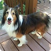 Adopt A Pet :: Sammy - Abingdon, MD