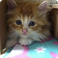 Adopt A Pet :: Red Lion - Trevose, PA