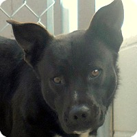 Adopt A Pet :: Donny - Wickenburg, AZ