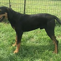Adopt A Pet :: Wyatt - Seguin, TX
