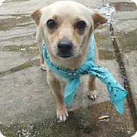 Adopt A Pet :: Romeo - San Antonio, TX