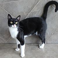 Adopt A Pet :: Sanford - Seguin, TX