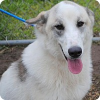 Adopt A Pet :: Cody - Anniston, AL
