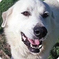 Adopt A Pet :: Grayson in NY - adopted - Beacon, NY