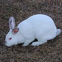 Adopt A Pet :: Titan - Hahira, GA