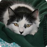 Adopt A Pet :: Wiggles - Fallbrook, CA