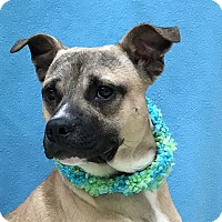 Adopt A Pet :: Teller - Evansville, IN
