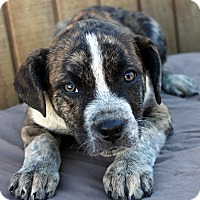 Adopt A Pet :: Baxter - Mayflower, AR