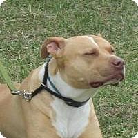 Adopt A Pet :: Rascal - LaGrange, KY