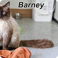 Adopt A Pet :: Barney - Batesville, AR