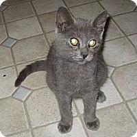 Adopt A Pet :: Grayson - Kirkwood, DE