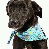 Adopt A Pet :: Sqweeker - Beaumont, TX