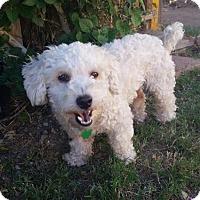 Adopt A Pet :: Princess - La Habra Heights, CA