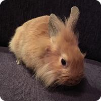 Adopt A Pet :: Zuri - Miami, FL