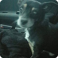 Adopt A Pet :: Goober - Hanover, PA