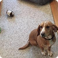 Adopt A Pet :: Mavis - Richmond, VA