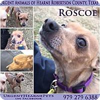 Adopt A Pet :: Roscoe - Hearne, TX