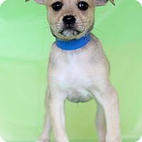 Adopt A Pet :: Eric - Waldorf, MD