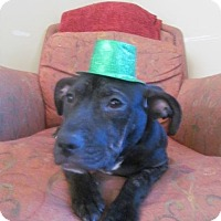 Adopt A Pet :: Kira - Patterson, NY