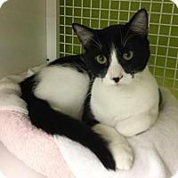 Adopt A Pet :: Ramsey - San Antonio, TX