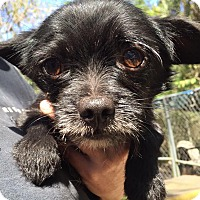 Adopt A Pet :: Birch - Orlando, FL