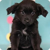 Adopt A Pet :: Mayonnaise - Waldorf, MD