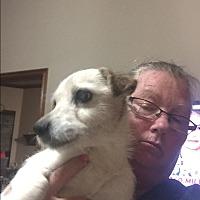 Adopt A Pet :: Pup - Blanchard, OK