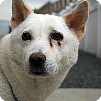 Adopt A Pet :: Gigi - West New York, NJ