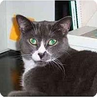 Adopt A Pet :: Dakota - Secaucus, NJ