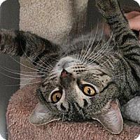 Adopt A Pet :: Alcatraz - Grand Rapids, MI