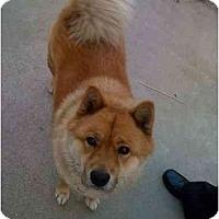 Adopt A Pet :: RJ - Southern California, CA