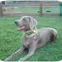 Adopt A Pet :: Miss Blue  **ADOPTED** - Eustis, FL