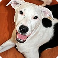 Adopt A Pet :: Izzy - Houston, TX
