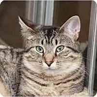 Adopt A Pet :: Frisco (Girl) - Naples, FL